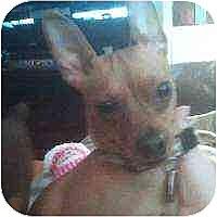 Adopt A Pet :: Luci - Florissant, MO