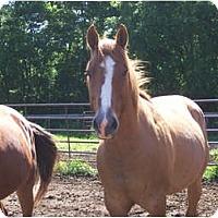 Adopt A Pet :: Copper - Lyles, TN