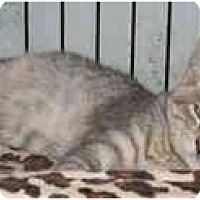 Adopt A Pet :: Luna - Jenkintown, PA