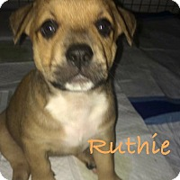 Adopt A Pet :: Ruthie - Salem, MA