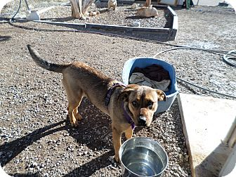 German Shepherd Dog Mix Dog for adoption in Edgewood, New Mexico - Marnie
