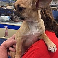 Adopt A Pet :: Hayley - Fresno, CA
