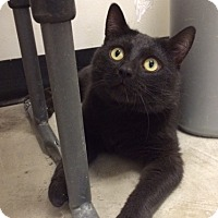 Adopt A Pet :: Azir - Byron Center, MI