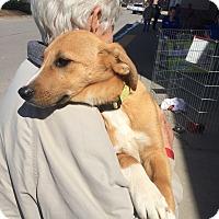 Adopt A Pet :: Alex - Hohenwald, TN