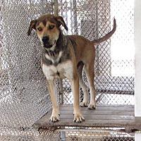 Adopt A Pet :: Carpenter - Haines City, FL