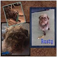 Adopt A Pet :: Rusty - Fort Wayne, IN