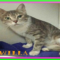 Adopt A Pet :: WILLA - Fort Walton Beach, FL