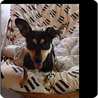 Adopt A Pet :: Scandy - Phoenix, AZ