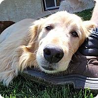 Adopt A Pet :: Gus - Denver, CO