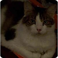 Adopt A Pet :: Ariel - Elkton, MD