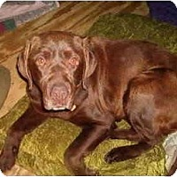 Adopt A Pet :: Brownie - North Jackson, OH