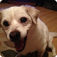 Adopt A Pet :: Addie - Wilmington, DE