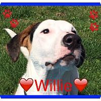 Adopt A Pet :: Willie - Raritan, NJ