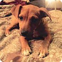 Adopt A Pet :: Gertie ~ Adoption Pending - Youngstown, OH