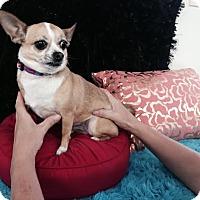 Adopt A Pet :: Queen - Surrey, BC
