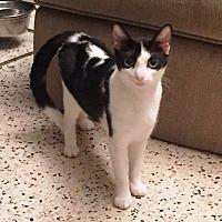 Adopt A Pet :: Gizzy - Tampa, FL