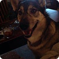 Adopt A Pet :: Zen - Egremont, AB