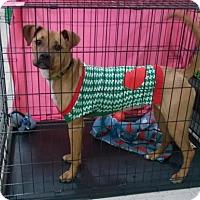 Adopt A Pet :: FIESTY - Terre Haute, IN