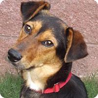 Adopt A Pet :: Junebug - Oxford, MS