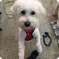 Adopt A Pet :: Kent - Thousand Oaks, CA