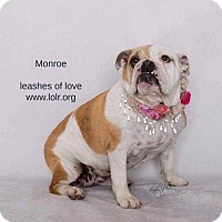 Adopt A Pet :: Monroe - Lake Forest, CA