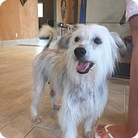 Adopt A Pet :: BECKY - Palm Desert, CA
