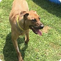 Adopt A Pet :: Jesse - Bridgewater, NJ