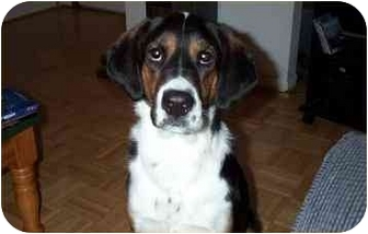 Coonhound Mix Dog for adoption in Cairo, Georgia - Lupie