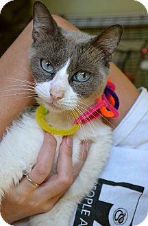 Domestic Mediumhair Cat for adoption in Corpus Christi, Texas - Jennifer