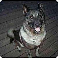 Adopt A Pet :: Maverick--Pending! - Belleville, MI