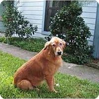 Adopt A Pet :: ABBY - Jacksonville, FL
