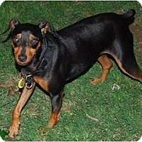 Adopt A Pet :: Prince - Nashville, TN