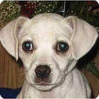 Adopt A Pet :: CUPCAKE - Plainfield, CT