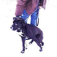 Adopt A Pet :: # 551-13  @ Animal Shelter - Zanesville, OH
