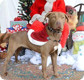 Labrador Retriever Mix Dog for adoption in Darlington, South Carolina - Anita
