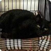 Adopt A Pet :: Stella - Byron Center, MI