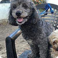 Adopt A Pet :: Annie - Van Nuys, CA