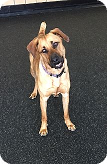 German Shepherd Dog Mix Dog for adoption in Battle Creek, Michigan - Champ