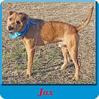 Adopt A Pet :: Jax - Hillsboro, TX