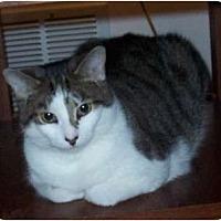 Adopt A Pet :: Sophie - Columbus, OH