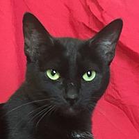 Adopt A Pet :: RUBY - pasadena, CA