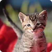 Adopt A Pet :: Leonis - Rosamond, CA
