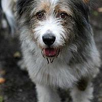 Adopt A Pet :: Mr.Scruffles - Sarasota, FL