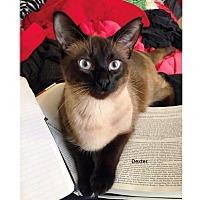 Adopt A Pet :: Dexter - Pinckney, MI