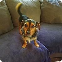Adopt A Pet :: Joey - Alexandria, KY