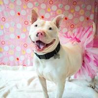 Adopt A Pet :: Sky - Eugene, OR