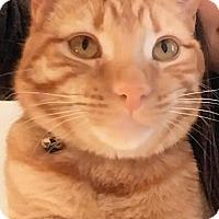 Adopt A Pet :: Mitch - Tucson, AZ