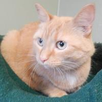 Adopt A Pet :: Patty Paws - Clearfield, PA