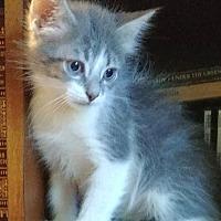 Adopt A Pet :: Edgar 15 - Austin, TX