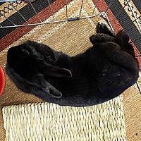 Adopt A Pet :: Tourmaline - Tustin, CA